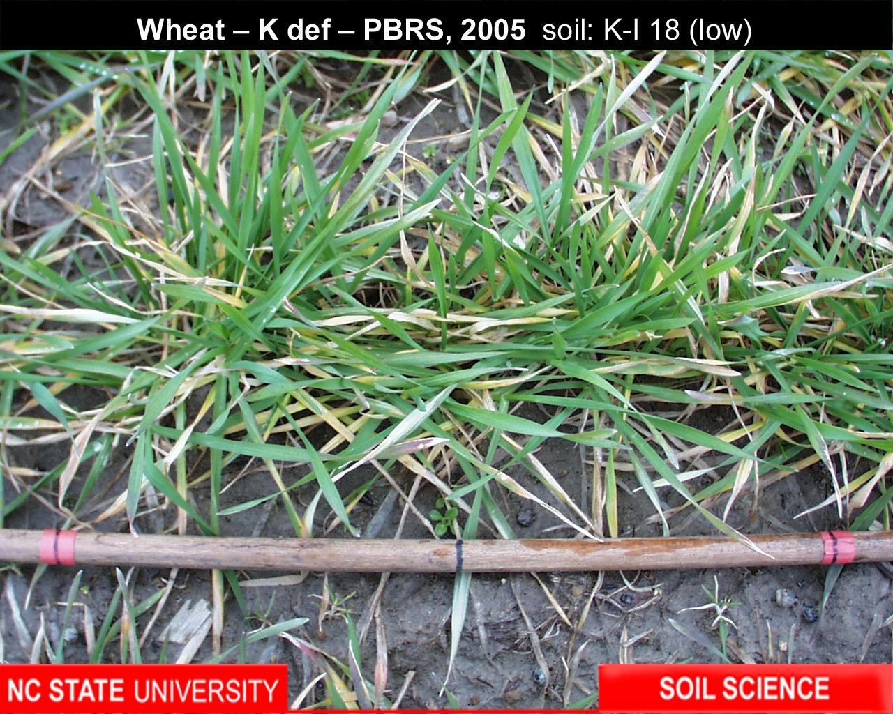 Soil fertility training nutrient deficiency image for Soil nutrients
